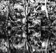 Garry riverbank reflections (Gordon Haws) Tags: perthshire riverbed struan rivergarry calvine blairatholl hydroelectricity garryriver