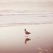 Ocean Beach_1