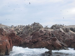 Islas Ballestas, Per (Rmaldonadob) Tags: sea tourism island mar turismo isla physicalgeography espacionaturalprotegido geografiafisica