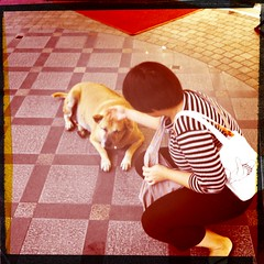 Oh I miss you so bad big boy (ubon) Tags: dog cute love bangkok mbk rambo