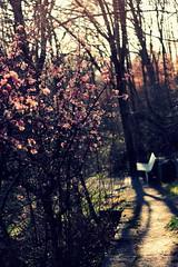 Cherry tree (Melvinia_) Tags: park tree nature bench munich münchen cherry 50mm westpark arbre banc cerisier citynature canoneos450d digitalrebelxsi