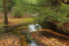 Halfway Run (2) (Nicholas_T) Tags: trees creek forest moss spring stream hiking pennsylvania creativecommons coniferous wetland unioncounty headwaters hemlocks understory tsugacanadensis baldeaglestateforest palustrine easternhemlocks hemlockswamp hemlockpalustrineforest halfwayrunnaturalarea halfwayrun