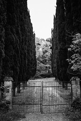 Untitled (Giacomo Foti Photo) Tags: bw italy rome roma digital canon fence blackwhite gate italia sigma 7d cypress 28 18 bianco nero