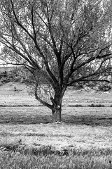Ramifications (Giacomo Foti Photo) Tags: italy white black rome roma tree digital canon italia branches 7d 18 50