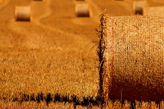 Harvest Time (acwills2014) Tags: harvest gold golden fieldsofgold texture bokeh bales straw