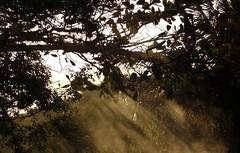 ... (suz_tr) Tags: nature natureza arvore azul arvores aa animal landscape daisy dark margarida nat car lake park cat laki candle candles magik magic pagan sea beautiful brasil black leaves road tea lua plants ch teatime oceano petala estrada