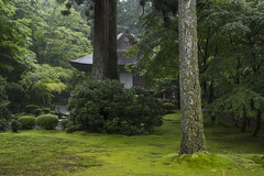 Yseien Garden in Rain  (Patrick Vierthaler) Tags:                    sanzenin sanzen monzeki temple summer sommer tempel midori green grn moss moos garten garden moosgarten yuseien yseien sakyo ohara rakuhoku kyoto kansai japan japanese japanischer rain regen