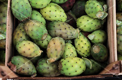 Juicy Prickle pear (Point .RAR) Tags: pointrarstudio pointrar point rar photovideoeditor photoeditor videoeditor photo video editor juicy pricklepear prickle pear travelaroundtheworld travelarounditaly arounditaly italy puglia market fruitmarket fruit travelling travel summerweather summerbeauty summervibes summer weather vibes beauty fruitpassion passion greencolour green colour newtaste new taste newlife life countrylife country goodhealth good health goodfood food nature beautiful beautifulplace place newplaces places travelshoot shoot macro zoom focus exposure photooftheday picoftheday followforfollow followme follow me