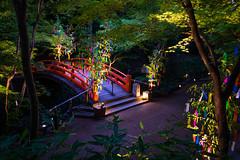 wishing on stars (Kitano-tenmangu shrine, Kyoto) (Marser) Tags: xt10 fuji raw lightroom japan kyoto shrine festival tanabata bridge nightview