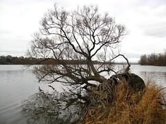 IMG_0986 (Gino Chnard) Tags: arbre automne eau fleuve montral parcnaturedelledelavisitation ville laval quebec canada