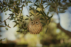 Ollie the Owl (z_a_r_a) Tags: owl toy ornament bokeh fun cute olive tree sigma 50mm f14 d750 nikon
