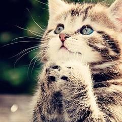 ultra- #lovely #kitten  #praying for her #wish  (Pretty Cool Pic) Tags: pretty cool ultra lovely kitten  praying for her wish