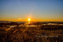 20160828-IMG_7754-WM (Pamela McLellan Zmija) Tags: saugeenshores portelgin sunset beach lakehuron goblesgrove sunshine pamelamclellanzmija
