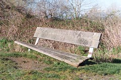 Here & There (Anne Abscission) Tags: everett washington langusriverfrontpark pacificnorthwest hiking trails nature spring woodenbench dilapidated broken bench graffiti olympusmjuzoom105 olympus mju kodakgold 200asa kodakgold200 filmphotography 35mm 35mmfilm film analog trees barebranches