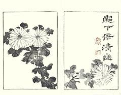 Florist's chrysanthemum (Japanese Flower and Bird Art) Tags: flower florists chrysanthemum grandiflorum asteraceae buncho tani nanga woodblock picture book japan japanese art readercollection
