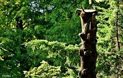 Totem (Franco DAlbao) Tags: francodalbao dalbao fuji tronco trunk rbol tree bosque wood talado felled verde green