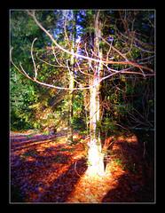 DSCF6542 Boom in het zonnetje (annelies_visser) Tags: sunlight tree nature natuur boom bos zon zonlicht putten