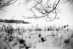 Branches (Spotmatix) Tags: camera winter snow film lens landscape countryside seasons belgium cosina 28mm places m42 vivitar villerslaville primes brabantwallon polypanf iso050