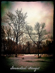 Dark day (Guaranteed(79)) Tags: trees lake snow ice dark woods shoreline greenbelt me2youphotographylevel2 me2youphotographylevel3 me2youphotographylevel1 me2youphotographylevel4