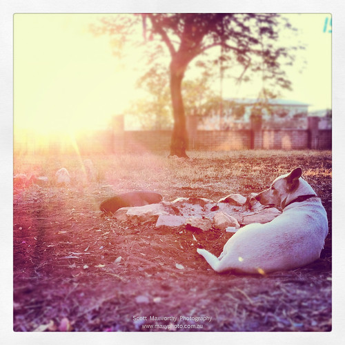 Gringo 1/2 Dingo.jpg
