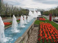 Ottawa Tulip Festival 2009 (lezumbalaberenjena) Tags: ontario canada festival ottawa tulip 2009 tulipa tulipn
