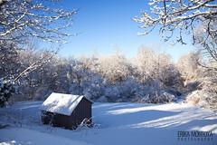 Nemo 3 (Erika Montoya) Tags: blue white snow cold tree ice frozen nemo branches freezing blizzard erikamontoyaphotography