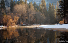 Merced River Early Morning, Yosemite (Charlotte Hamilton Gibb) Tags: california trees winter water reflections river nationalpark yosemite yosemitenationalpark yosemitevalley mercedriver yosemitenp