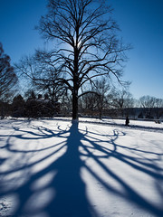 _2090085-20.jpg (Gerry McGee) Tags: afternoon greatlawn elementsorganizer february2013
