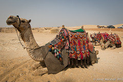 Ticket to ride (Janet Marshall LRPS) Tags: egypt camel giza nostalgicnile