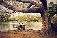 couple at duck pond (uninvented colors) Tags: park brown tree green love nature water birds bench landscape pond louisiana couple neworleans ducks liveoak duckpond