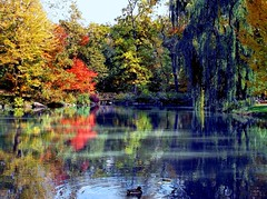 The Blue Willow of Central Park (Eddie C3) Tags: nyc newyorkcity autumn nature centralpark fallfoliage