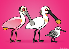 Spoonbills are awesome (birdorable) Tags: