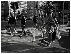 MONDO CANE 11 (ORANGUTANO / Aldo Fontana) Tags: street dog dogs calle perros callejero quiltros orangutano aldofontana