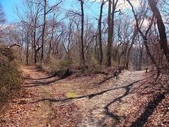 which way should I go (symsym001) Tags: new york ny island li march woods long fuji path farm fork fujifilm hoyt x10 march13 commack hoytfarm 2013 hoytfarmnaturepreserve fujifilmx10 fujix10