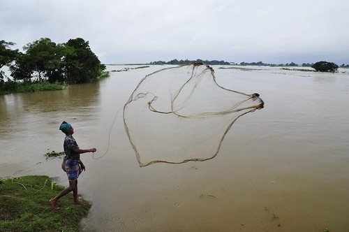 Fishing with cast net in Bangladesh. Photo by Balaram Mahalder, 2010.