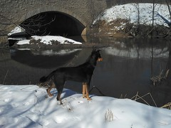(GXM.) Tags: dog chicago dexter gxm 2013 northbranchchicagoriver