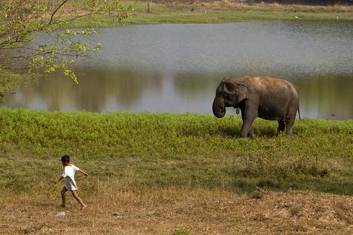 Elephan & Boy
