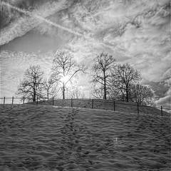 structures (koaxial) Tags: schnee trees winter light blackandwhite bw snow cold ice monochrome clouds contrast munich mnchen licht wolken olympus sw schwarzweiss kontrast bume zuiko hdr luminance hugin schwarzweis 1442 koaxial mygearandme mygearandmepremium photographyforrecreation olympusepl5 rawtherapie epl5 p3021216orf012p5b