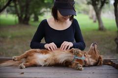 Don't stop (Taipei street life) Tags: dog pet canon paw sigma f28 6d duchshund 2470