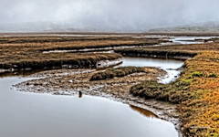 Point Reyes Estuary (stephencurtin) Tags: color water grass fog point landscape mud large estuary photograph eel estero channel drakes reyes dense brackish stephencurtin