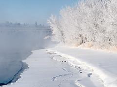 White on White (Gerry Marchand) Tags: bridge winter river frost hoarfrost olympus omd saskatchewanriver em5