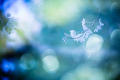 Dreaming (moaan) Tags: life spring dof blossom bokeh multipleexposure utata cherryblossom sakura blossoming sprung 2013 inlife canoneos5dmarkiii ef70200mmf28lisiiusm