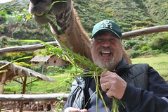 Feeding Llamas (sfPhotocraft) Tags: me peru southamerica smile mouth beard fun feeding llama jim baseballhat 2013 jimschnobrich