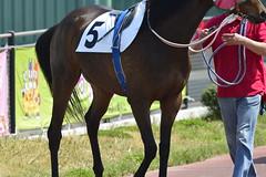 20130405-_DSC3674 (Fomal Haut) Tags: horse japan nikon nagoya 80400mm d4   14teleconverter  d800e