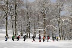 Ibiltariak (Paulo Etxeberria) Tags: snow forest nieve bosque neige walkers forêt elurra navarra basoa nafarroa randonneurs caminantes urkiaga quintoreal kintoa ibiltariak clubvascodecampingelkartea