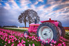 Jane Deere (Darren White Photography) Tags: life morning pink tractor windmill clouds oregon sunrise canon early spring tulips northwest bright pacificnorthwest woodenshoe johndeere springtime tulipfestival woodburn scenicoregon 1635l outdoorphotographer pinktractor oregontravel traveloregon darrenwhitephotography 5dmkii