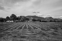 Paestum (simone.defilippis) Tags: paestum cilento agricolo farm