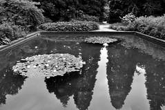 Seerosen-Inseln (Lichtabfall) Tags: seerosen pond teich water wasser reflection spiegelung plantenunblomen landscape blackwhite blackandwhite landschaft monochrome schwarzweiss hamburg waterlilies lily lilies