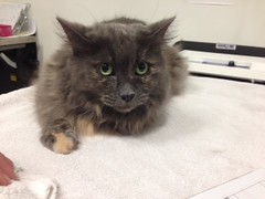 Barbie - 10 year old spayed female