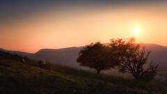 Scotland Sunset (bingrens) Tags: sunset scotland sheep tree sun orange
